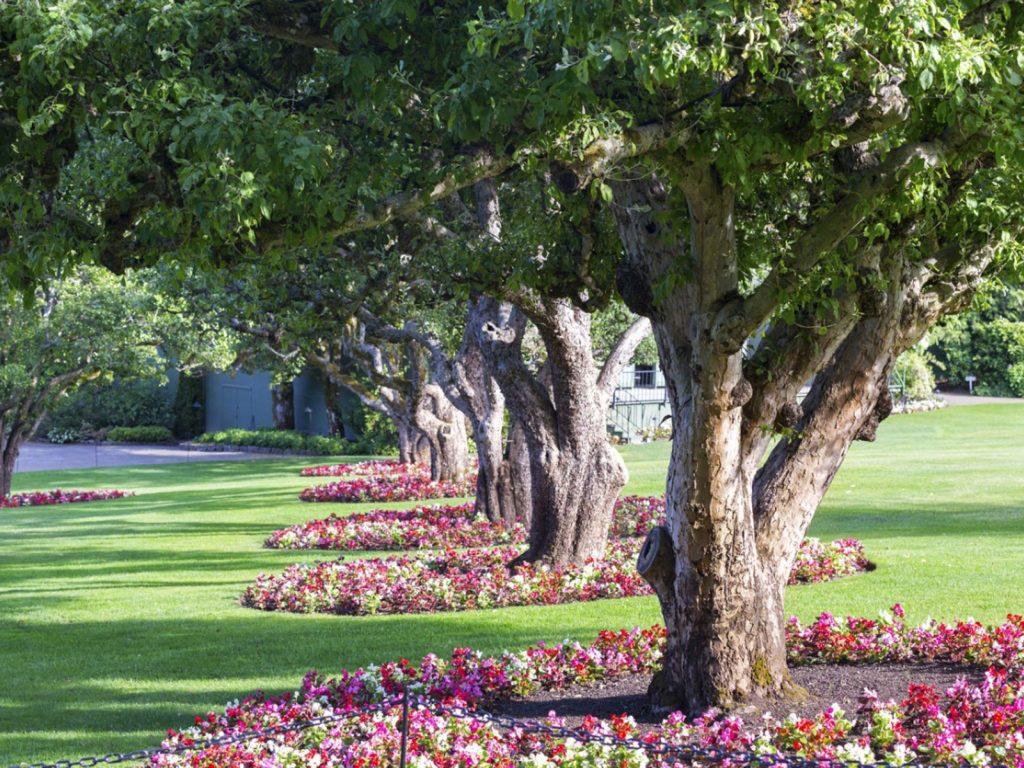 Una buena organización de carpetas se parece a un jardín con unos pocos árboles gruesos y ramas bien definidas.